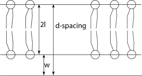 Figure 4: Lipid layer dimension terminology. l is the lipid length, W is the thickness of the water layer between membranes. The d-spacing is 2l + W.
