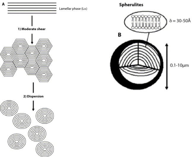 Figure 1: Preparation of a dispersed spherultic sytem B from the lipid lamellar phase A.